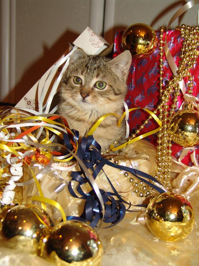 Weihnachtsgefahren für Haustiere