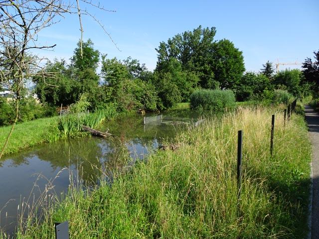 Zaun oder nicht Zaun: Das Kleinod Mühleweiher mit dem Fussweg (ganz rechts), den seit knapp einem Jahr auch Kindergärtler benützen. Foto: Jörg Wägli